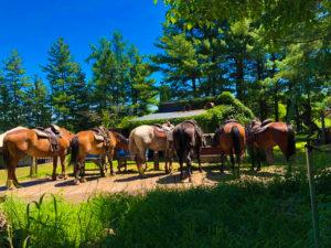 horseriding in asahikawa