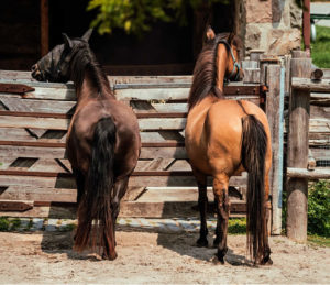 horseriding_in_hokkaido