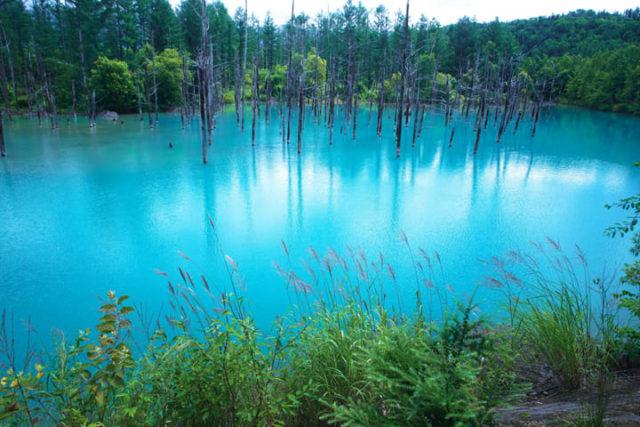青い池_003