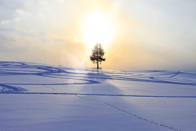 美瑛 夕日の木
