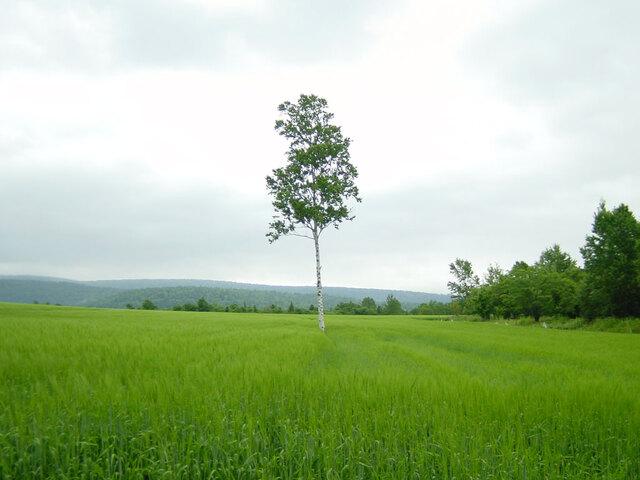モノローグの木