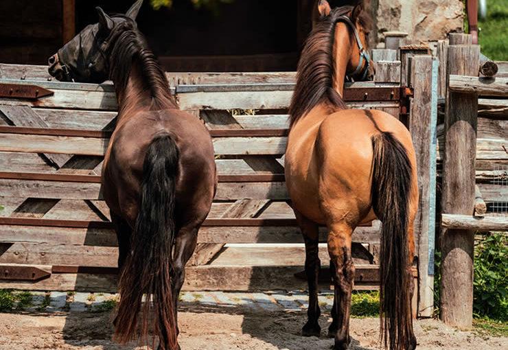 小樽乗馬体験