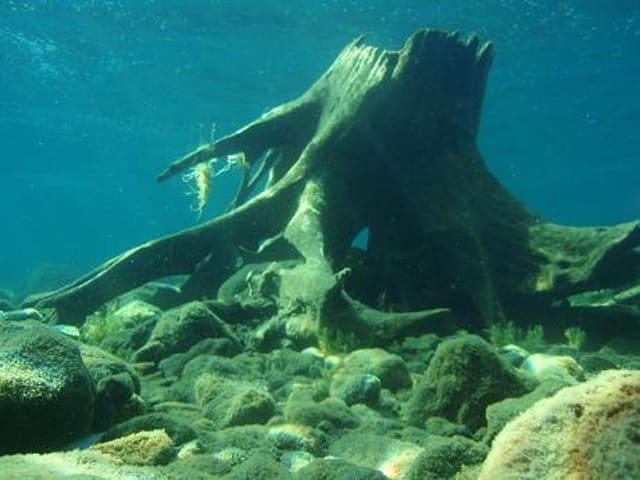 支笏湖体験ダイビング