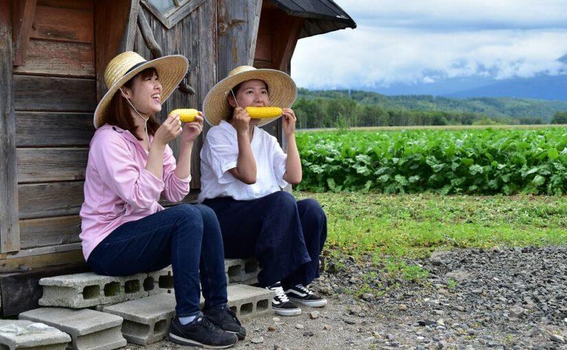 美瑛とうきび収穫体験