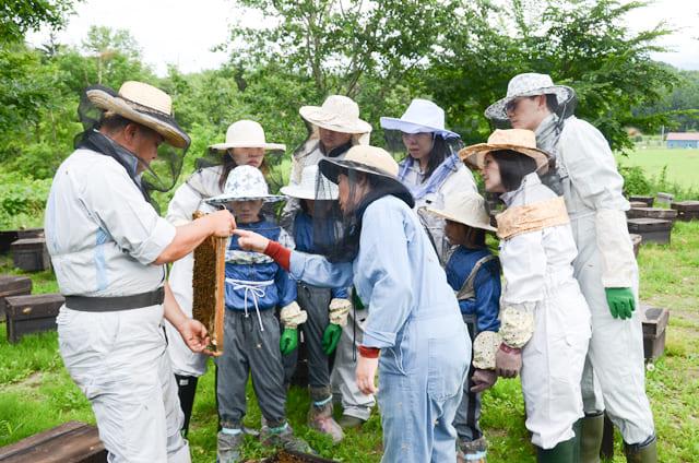 養蜂体験_富良野