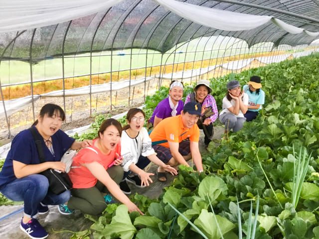 メロン収穫体験_富良野