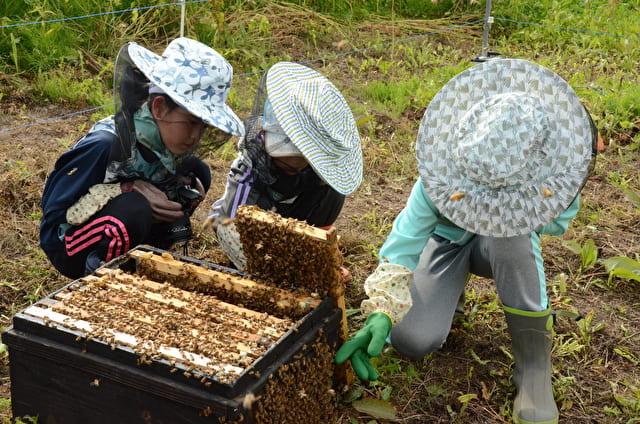 富良野_養蜂体験