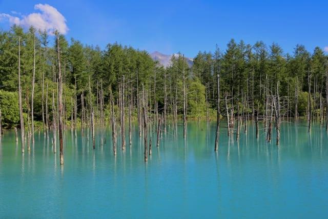美瑛‗青い池