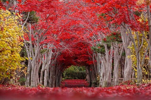 札幌 紅葉