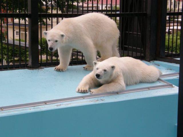 帯広 おびひろ動物園